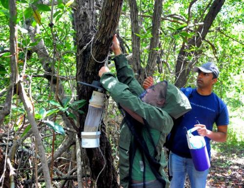 Summrtime buzz in the everglades all about mosquitos!