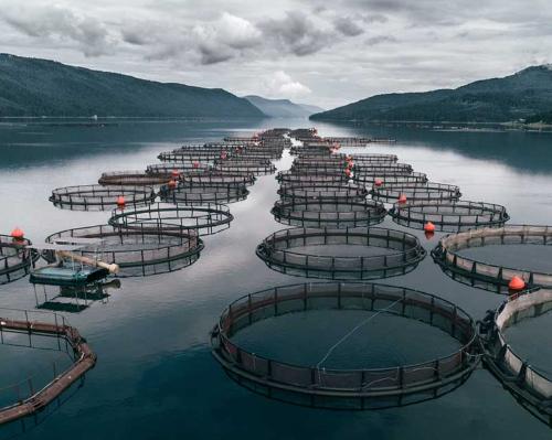 Aquatic Ecosystems Source of Half of Global Methane Emissions