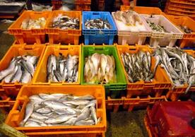 Biodiversity's Healthy Byproduct — Nutrient-Rich Seafood