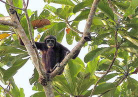 Tree-dwelling mammals endured after asteroid strike destroyed forests